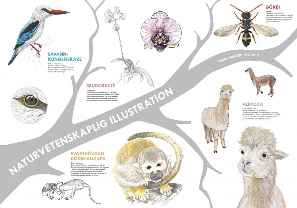 naturvetenskaplig_affisch